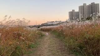 갈대밭에서 산책하는 강아지