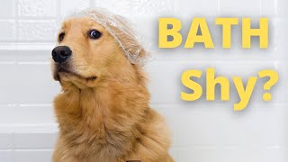 HOW TO PREPARE YOUR DOG FOR GROOMING: FEAT. STACY ALLDREDGE, PROFESSIONAL DOG TRAINER