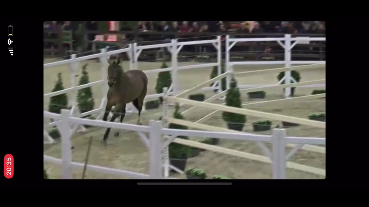 BWP Stallion Approval 2020 Loose Jumping