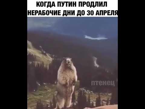 Когда Путин продлил нерабочие недели до 30 апреля