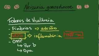 Neisseria gonorrhoeae - Resumo - Microbiologia