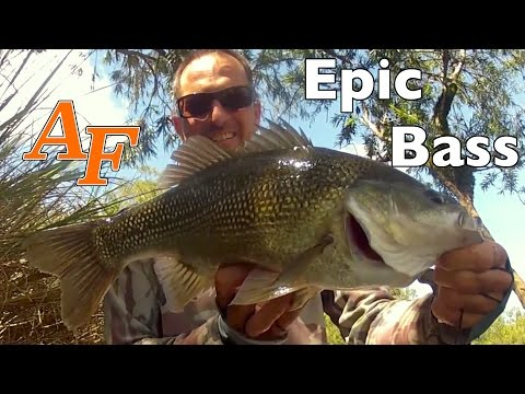 Bass kayak fishing the Clarence River with Eastern Cod Pt1 Day 5 of trip Andy's Fish Video EP.317