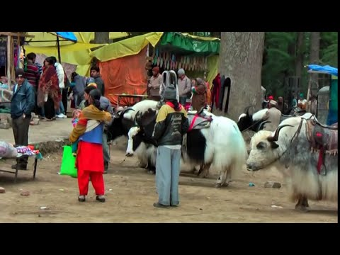 MANALI.THE BEAUTIFUL HILL STATION IN  HIMACHAL  HD