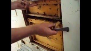 Павильонное пчеловодство КФХ Украинский ВН