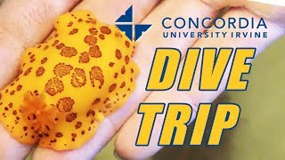 Join Us For a Dive Trip in The Pacific with Concordia University Irvine Marine Lab