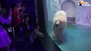Saddest Bear In The World Is Going Crazy