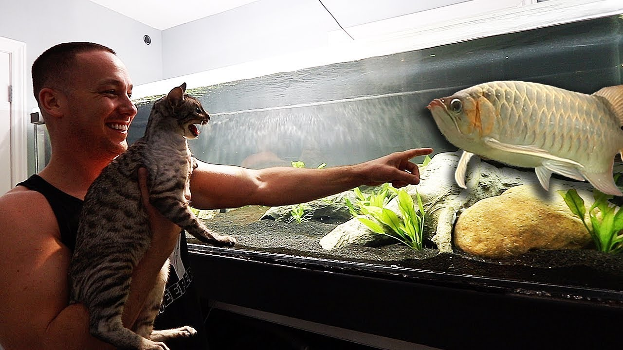 WILD CAT reacts to my AQUARIUMS!!