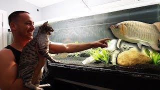wild-cat-reacts-to-my-aquariums