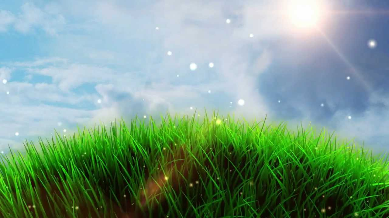 green grass field animated. Green Grass Field Animated O