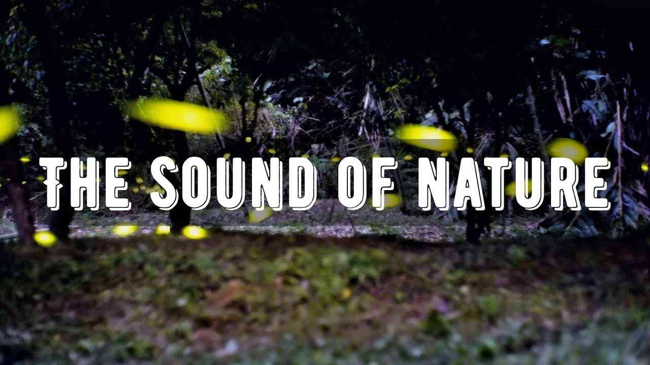 螢火蟲之歌》鳥鳴聲 流水聲 蟲鳴聲 大自然聲 1 hour - YouTube
