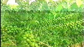 Brazilian Estates Coffee