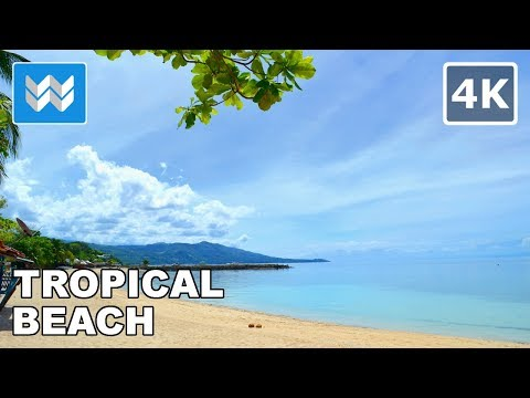 🌴☀ Relaxing Tropical Beach Waves & Nature Ambience Sound 🌊🎧【4K】