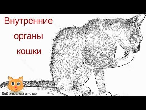 Вопрос: Почему у кота шершавый язык?