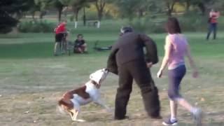 防衛片袖、防衛スーツ、犬訓練ムチが使われているアジテーション訓練の...