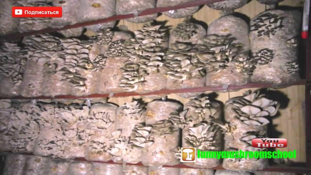 Лук, чеснок, картошка и грибы семена по низким ценам в интернет магазине agro-market. Доставка в одессе, киеве, по всей украине. ✓ гарантии. ✓ профессиональная консультация. ☎ 0 (800) 75-11-00.