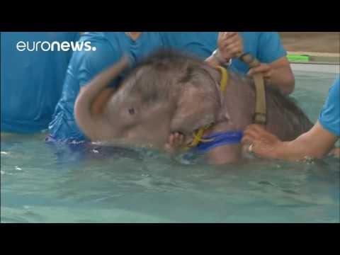 Babyelephantrecieves hydrotherapy forinjuredfoot, Thailand