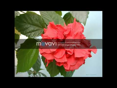 Magtymguly Pyragy  Muhammet S,A,W