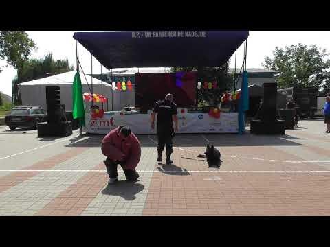 "Jandarmeria ""jos pălăria!"" la ZMT (12.08.2017)"