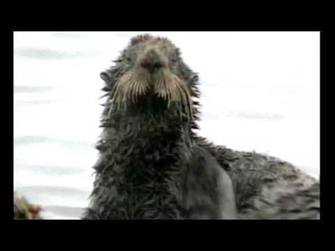 Deep Water Horizon sea massacre
