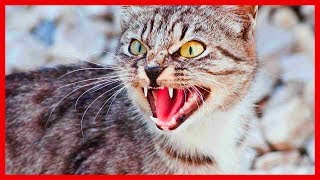 Psyco cat going nuts!