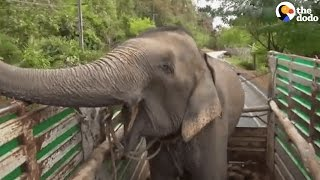 Elephant Rescue: Elephants Get First Taste of Freedom | The Dodo