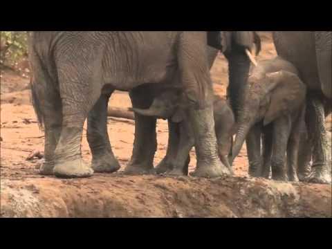 Wild Wings Safaris: Baby Mine