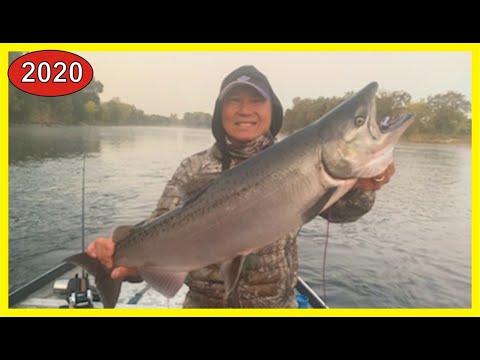 American River Salmon Fishing Report 2020: First Salmon Of The Season For PRO & JU Team!