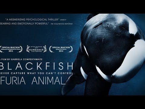 Blackfish Fúria animal - Documentário Dublado (2014)
