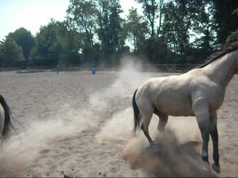 Drill Team Horses At Saratoga