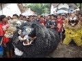 Macan macanan Jaranan Wongso Kenongo  Aliyan Berak