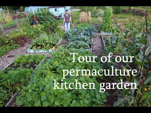 Tour of our permaculture kitchen garden
