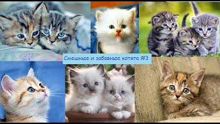Смешные и забавные котята #3