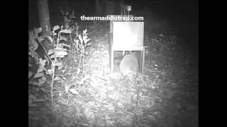 The Armadillo Trap working its magic!