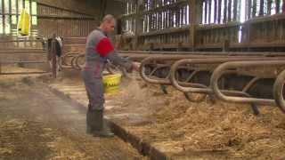 MISTRAL điều hòa chất độn chuồng trong buồng vệ sinh cho bò