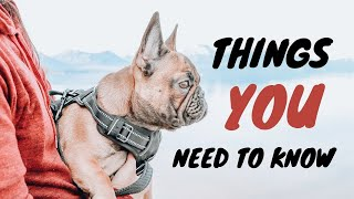 Before You Get a French Bulldog│What you NEED to know