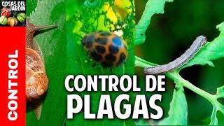 Cómo ganarle a las plagas  - tienes que ver este video @cosasdeljardin