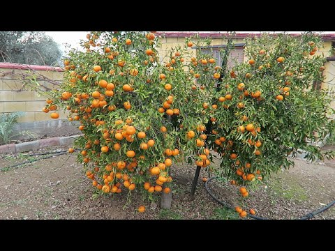 The Allotment Bubble - Episode 2 - A Cyprus Garden