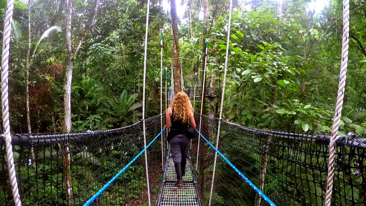Amazon Rainforest Canopy Walk at Sacha Lodge