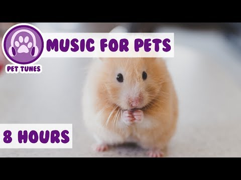 8 Hours of Soothing Music for Pets! Calm Anxiety and Reduce Bad Behaviour with Calming Pet Music! 🐹