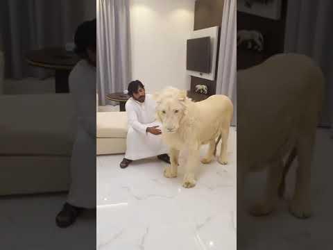 Dubai king Sheikh Nawab    with white lion    Dubai lifestyle    luxury life