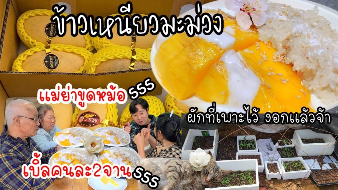 EP.495 ข้าวเหนียวมะม่วง ทุกคนเบิ้ล2 เเม่ย่าขูดหม้อ เอาเเล้วๆ555 ผักไทยที่เพาะไว้งอกเเล้วนะคะ~เย้ๆ~