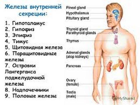 Диспепсические расстройства: причины, симптомы и лечение