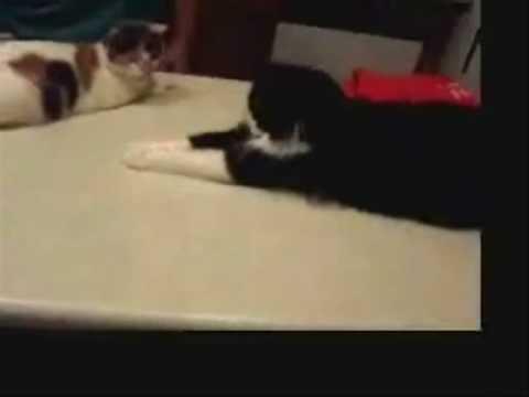 The Charleston Cats (Dancing Cats)