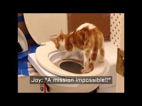 Cat Toilet Training Step by Step