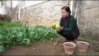 【西北小强 English Sub】冬天如何栽种佛手瓜,爸爸做了豆腐刀削面-Plant vegetables in winter,Sechium edule,Tofu,Sliced noodles