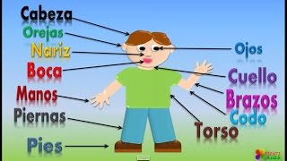 Las Partes Del Cuerpo Para Niños, Our Body Parts In Spanish For Children (Video Infantil)