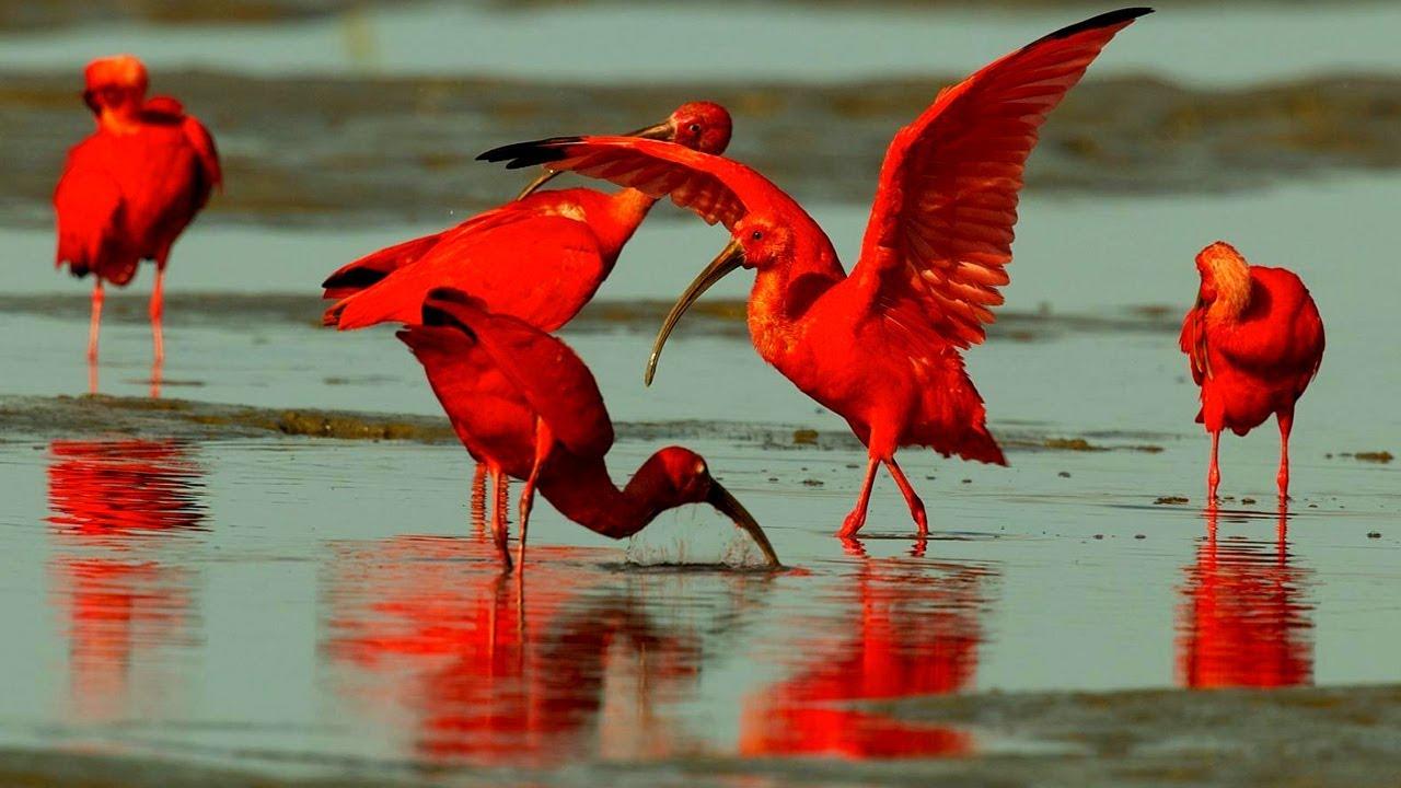 اجمل 10 طيور في العالم لونها احمر