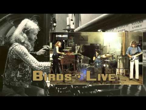 Trace - Birds - Live