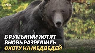 Медведи, свиньи и право на охоту