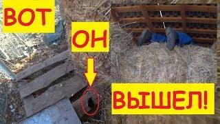 Похолодало... / Курица вывела цыплят в сене / Семья в деревне